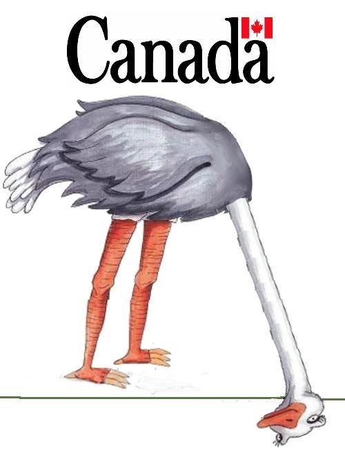000canadian-ostrich